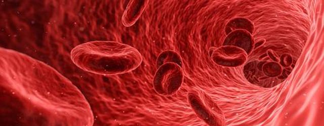 How red blood cells behave in crowded vessels